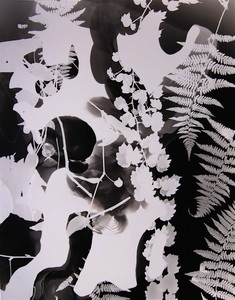 Camera Obscured: Photograms by Paul Bloomfield at the Michele & Donald D'Amour Museum of Fine Arts