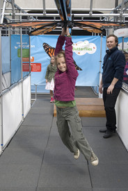 Amazing Butterflies Set To Land At Museums