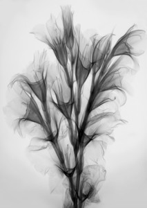 Radiographic Photography by Merrill Raikes: The Inner Beauty of Flowers at the Michele & Donald D'Amour Museum of Fine Arts
