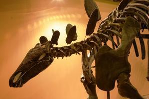 Dino-mite Dinosaurs