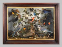 Framed Victorian Bird display, 19th century, Springfield Science Museum, SSM-2008/11-1