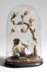 Victorian Domed Hamster display, 19th century, Springfield Science Museum, SSM-2006/5-43