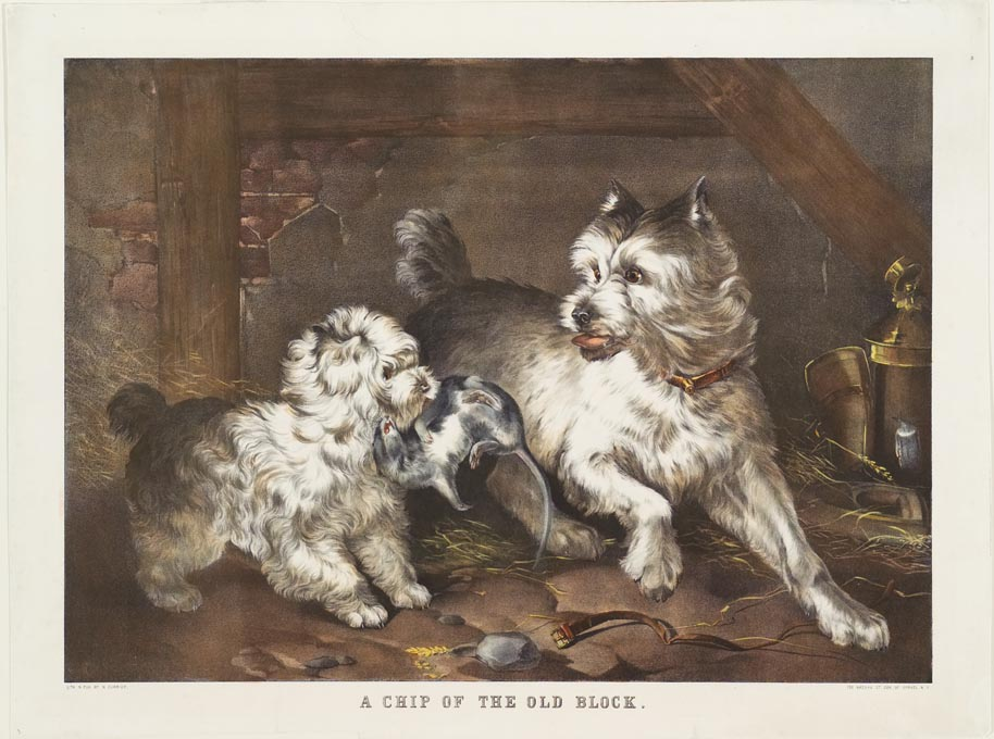 Two white dogs