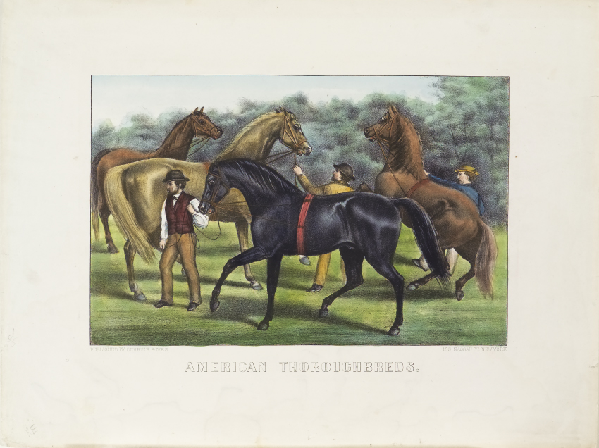 Three brown horses standing behind one black horse at center being led off to left