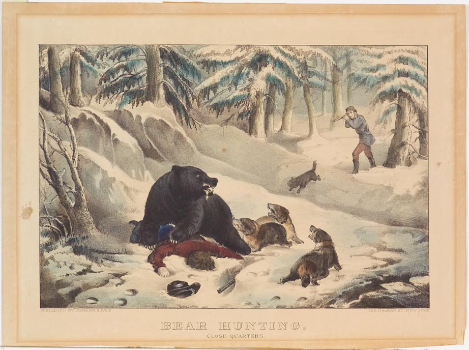Winter scene of bear attaching hunter who is lying face down in snow