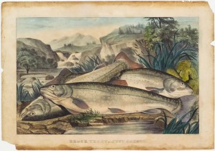 Brook Trout, – Just Caught, Currier & Ives