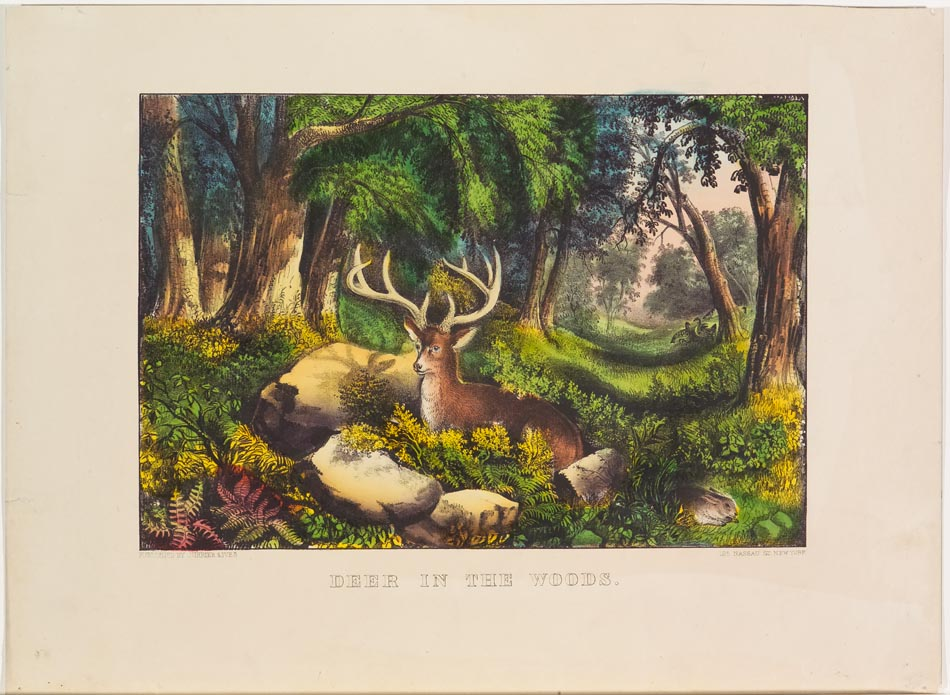Woodland scene with stag lying at center on ground surrounded by stones