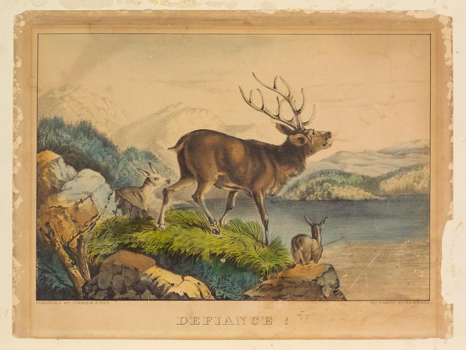 Stag at center of image facing right