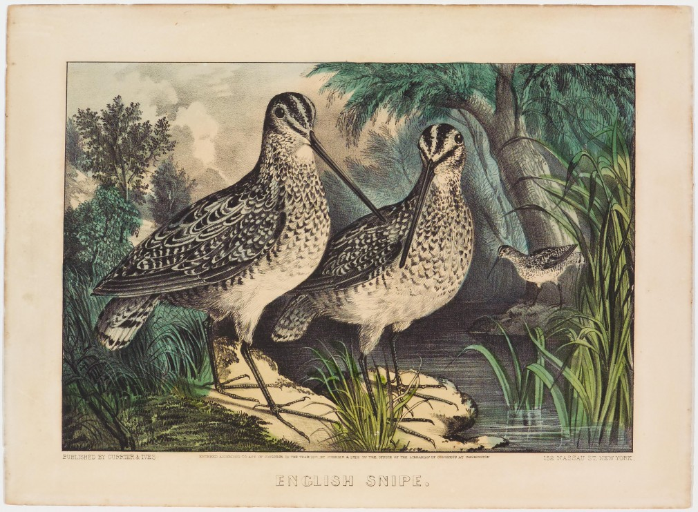 Pair English snipe in foreground