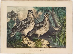 English Snipe, Currier & Ives