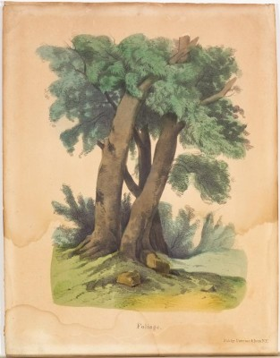 Foliage, Currier & Ives