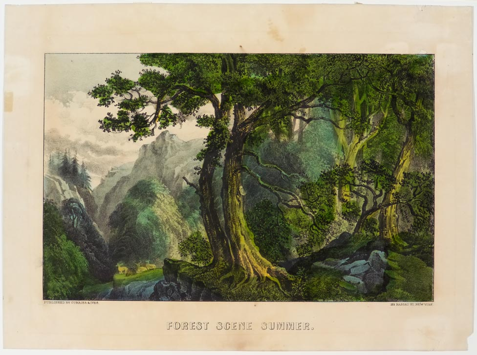 Woodland scene - trees to right