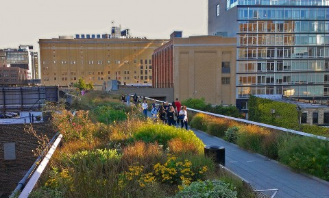 High Line Urban landscape New York