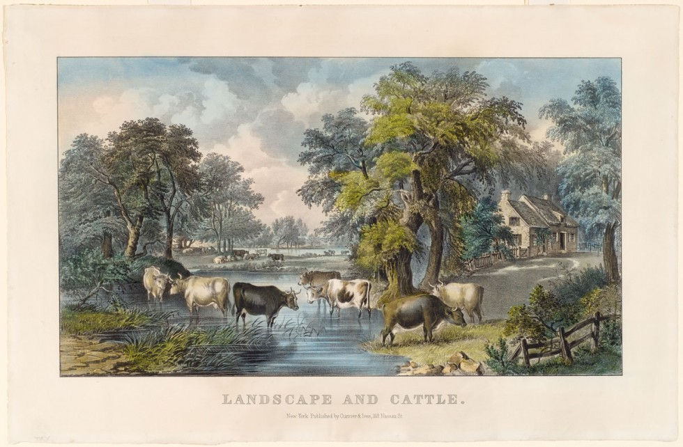 Pastoral scene of seven cattle in foreground crossing back and forth over brook in yard aside farmhouse on right