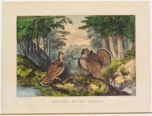 "Mating In The Woods. ""Ruffled Grouse"", Currier & Ives"