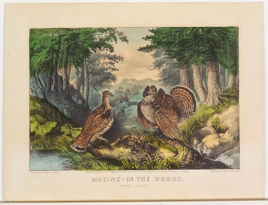Pair of grouse at center in woodland scene by stream