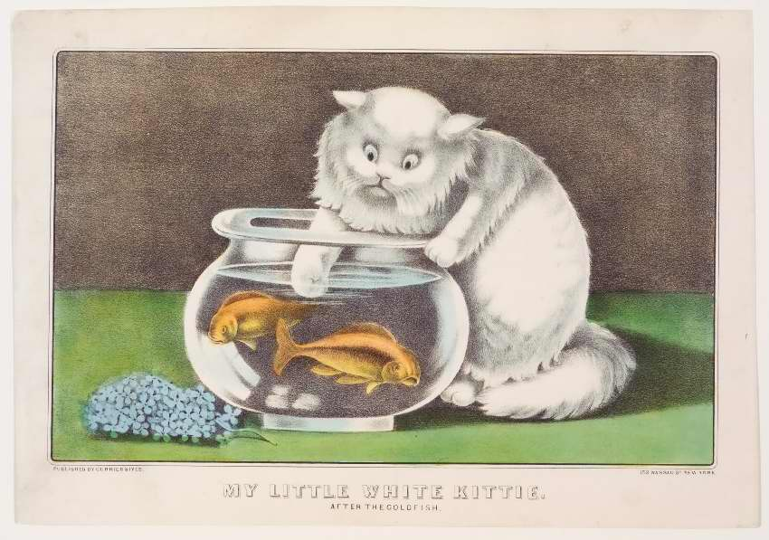 White cat to right of clear bowl filled with water and two goldfish