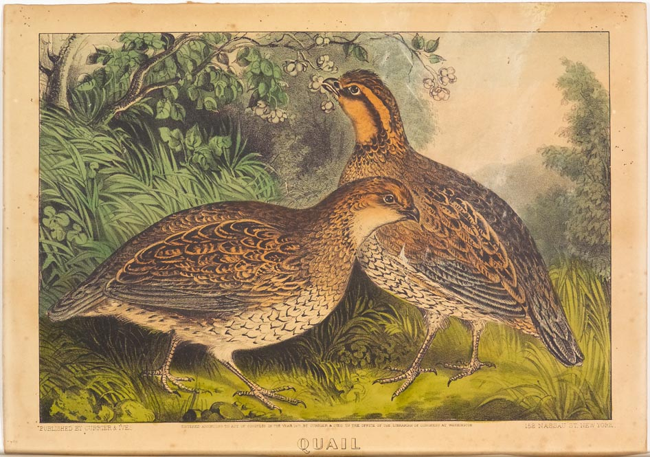 Two quails at center in woodland facing each other