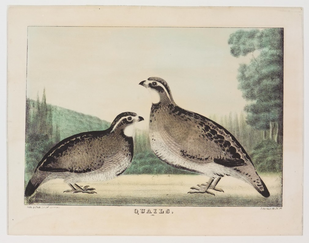 Two quails facing center and each other - hillside left background