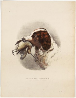 Setter And Woodcock, Currier & Ives