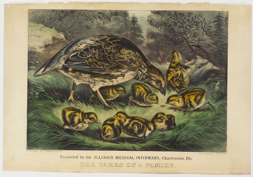 Woodland scene of Mother bird with eight chicks