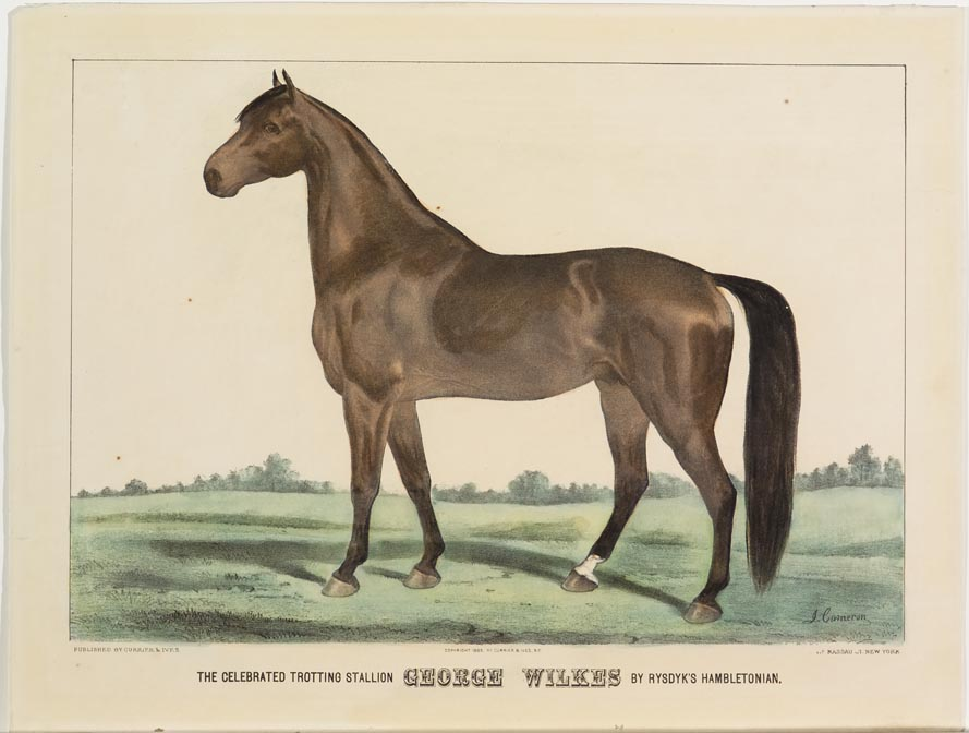 Horse standing in field at center and forefront image