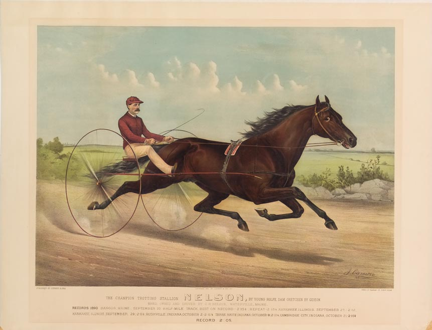 Trotting horse and driver on track - bred