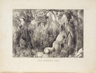 The Puzzled Fox, Currier & Ives