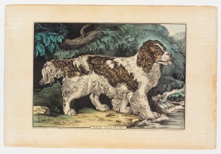 The Spaniel., Nathaniel Currier