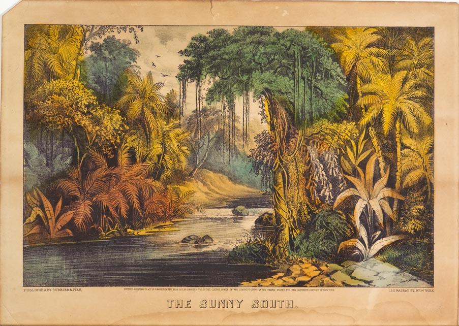 Landscape scene of river running through woods