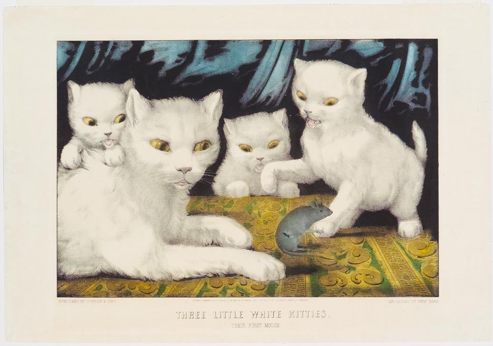 Three white kittens