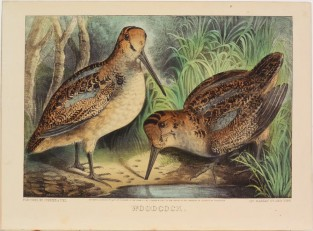 Woodcock, Currier & Ives