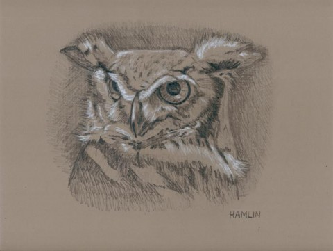 Owl drawing by Steve Hamlin