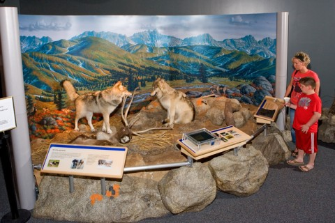 Wolf to Woof Exhibition