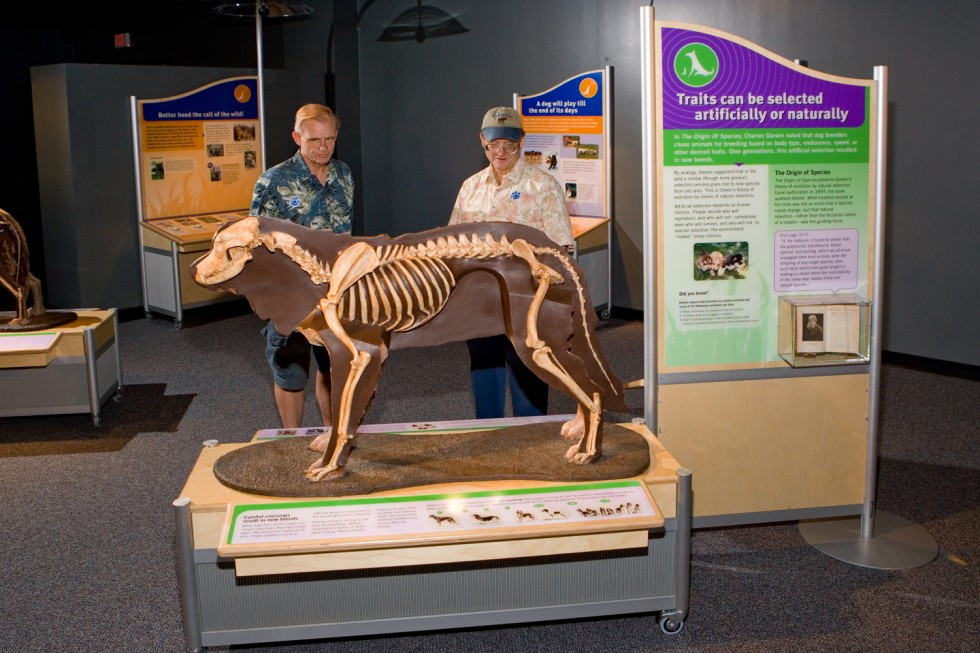 New Exhibit Traces Journey Of Dogs From Wolf To Woof