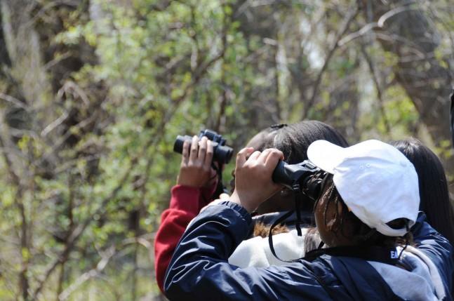 people birdwatching