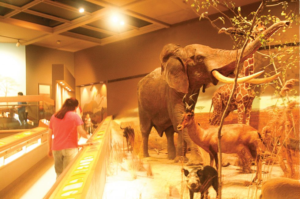 Springfield Museums Announce Summer Hours, Discounts For Military
