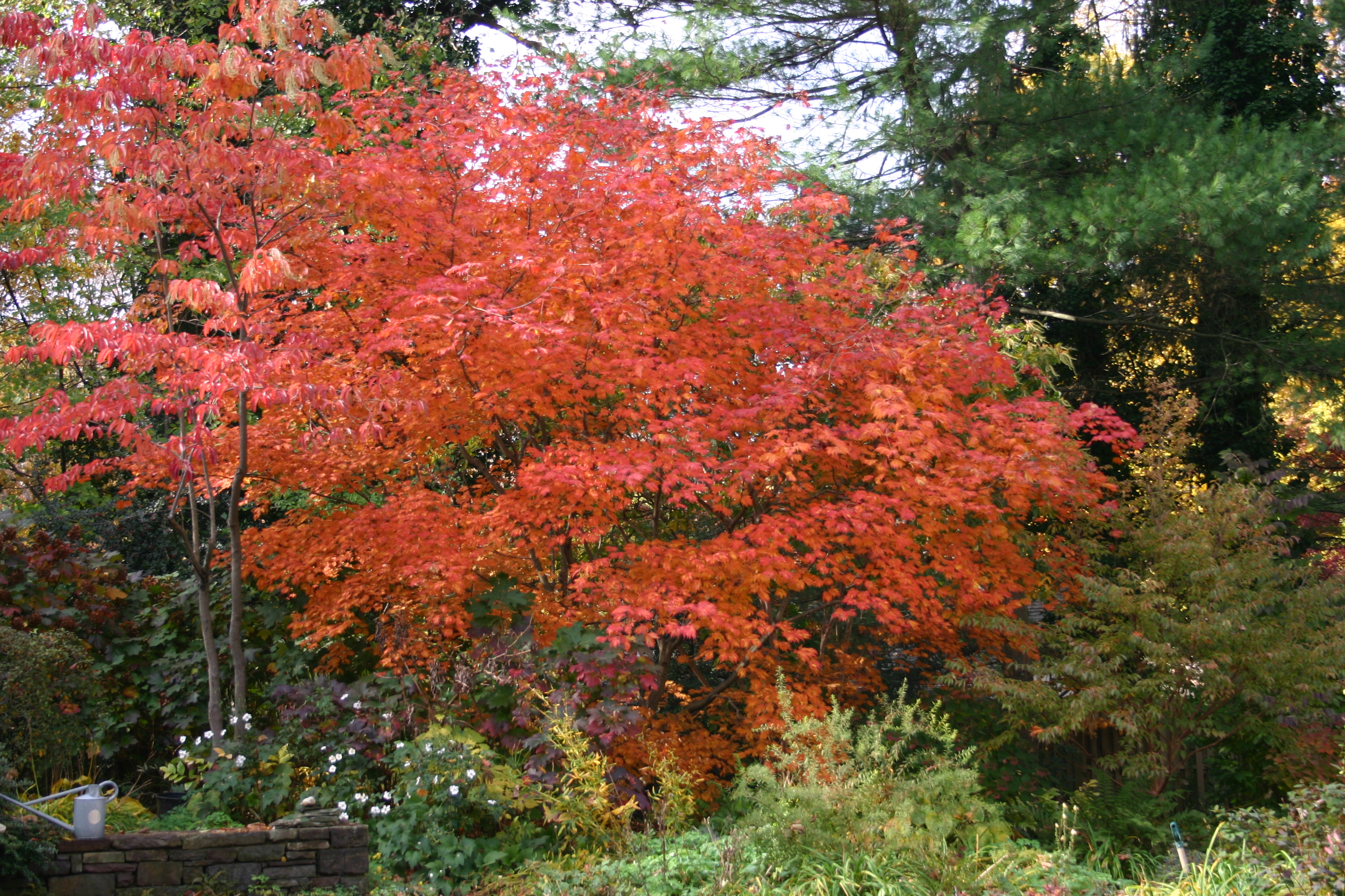 Smith College Bulb Show 2020.Botanic Garden Of Smith College Fall Color Springfield