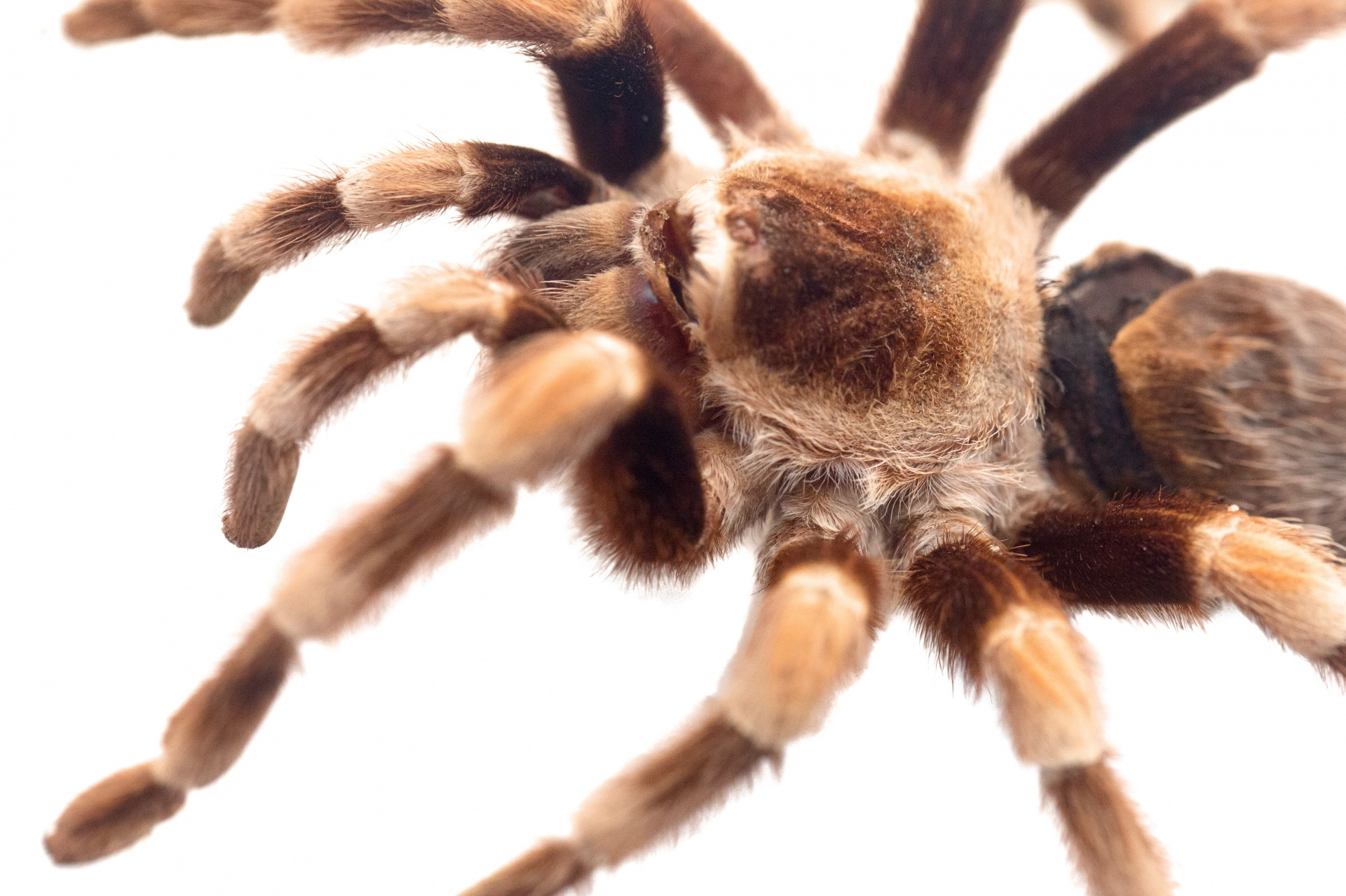 A Tangled Web: Spiders