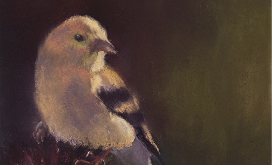 Painting Songbirds In Pastel