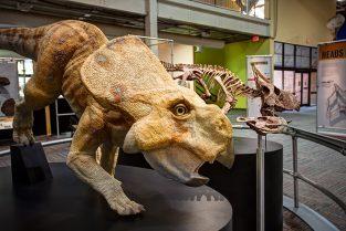 Twin Protoceratops Dinosaur Discoveries