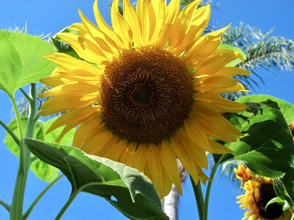 Van Gogh: Plant