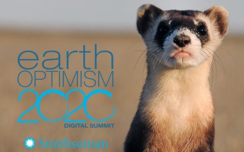 Earth Optimism 2020