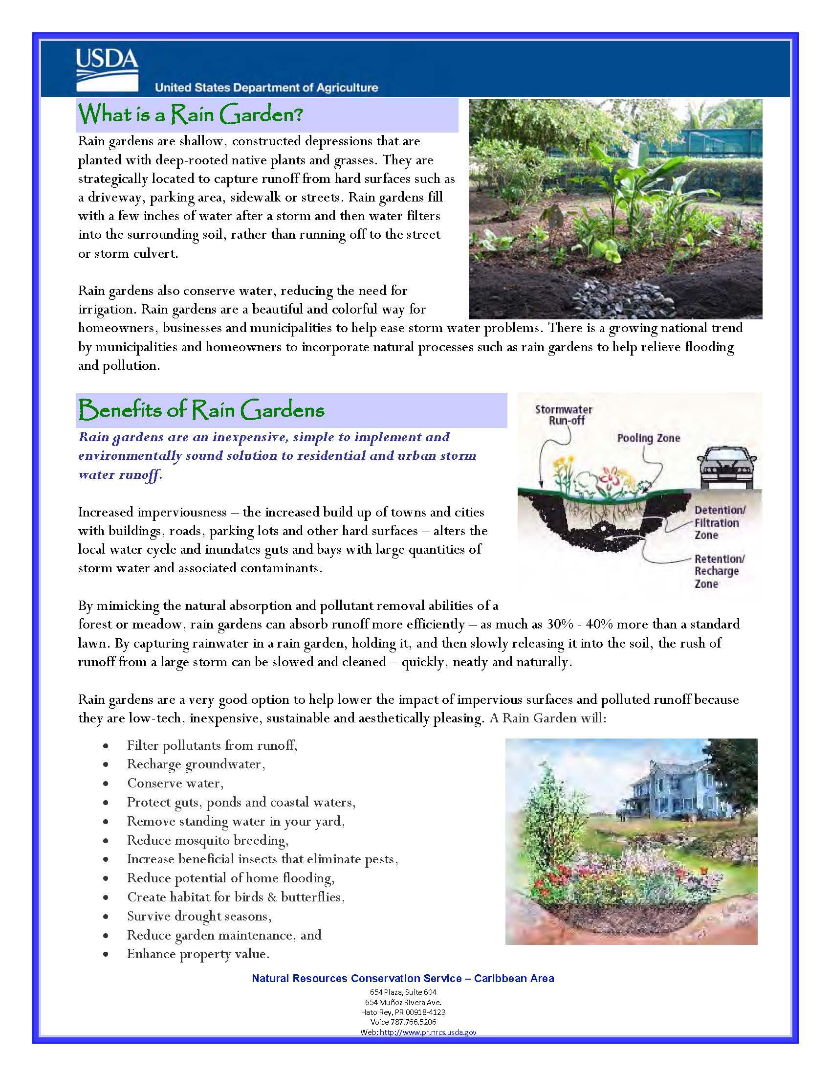 Rain Garden Fact Sheet