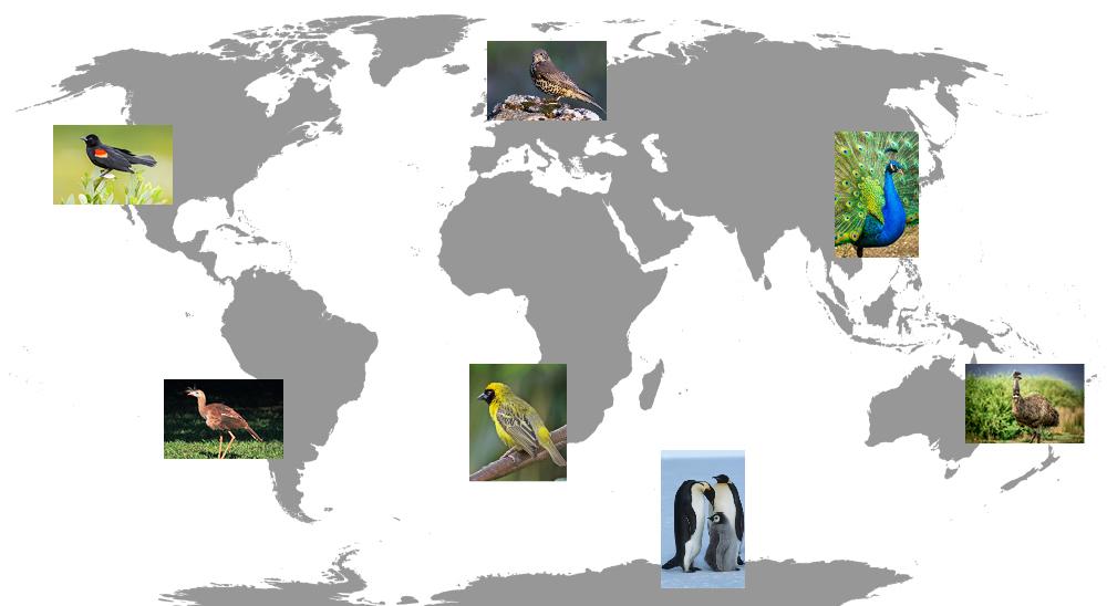 Birds Around the World