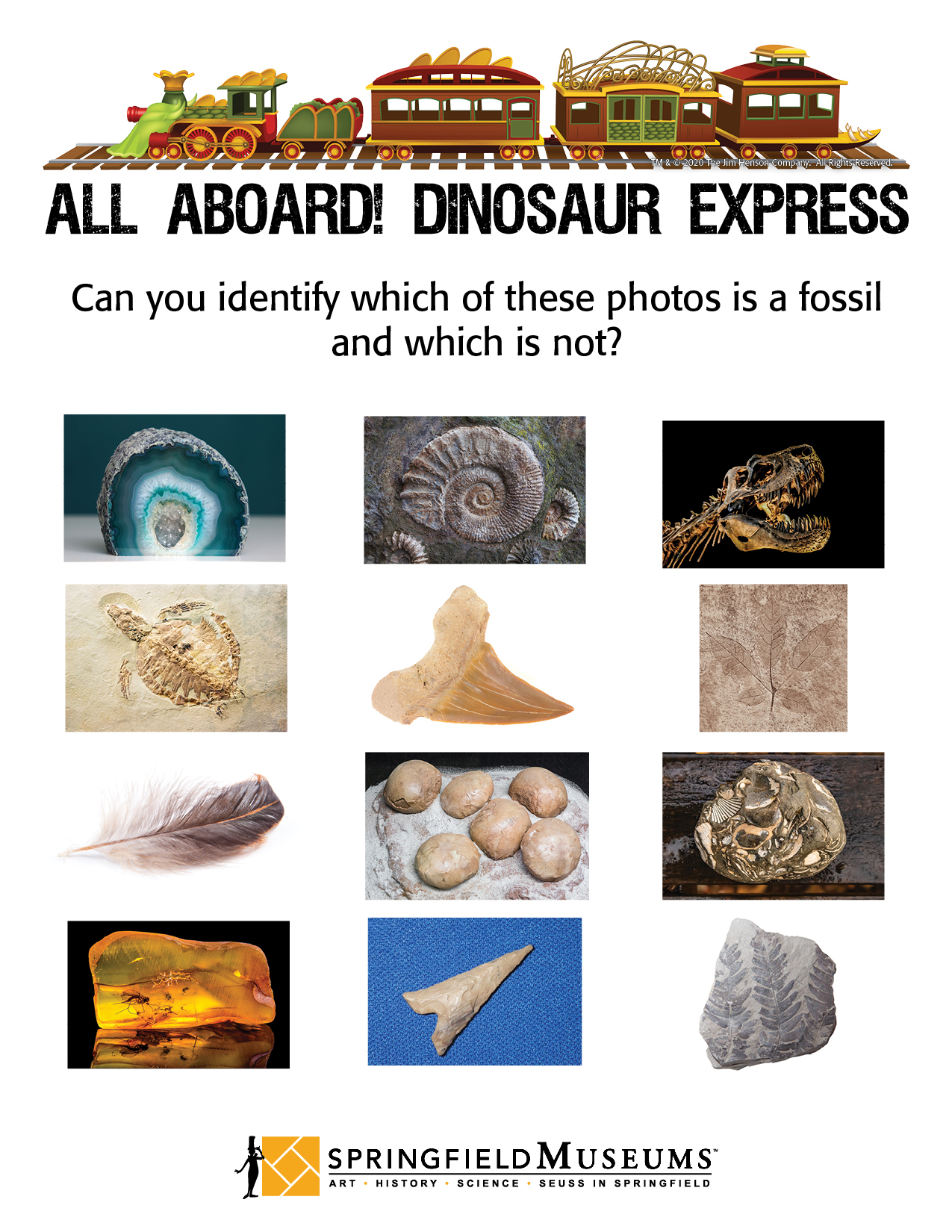 Can you identfy which of these are fossils?