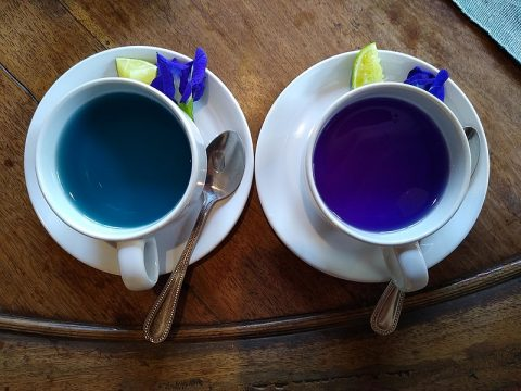 Blue pea flower tea