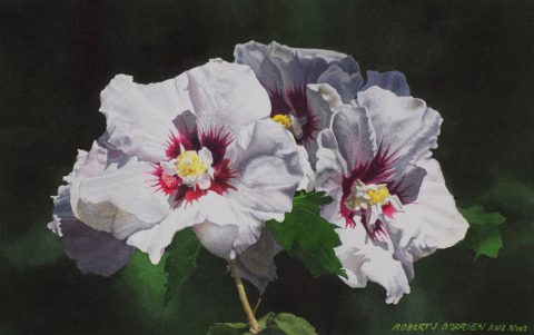 Rose of Sharon Watercolor