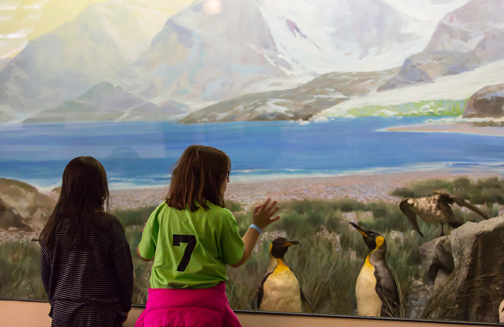 Girl Looking At Penguin Diorama