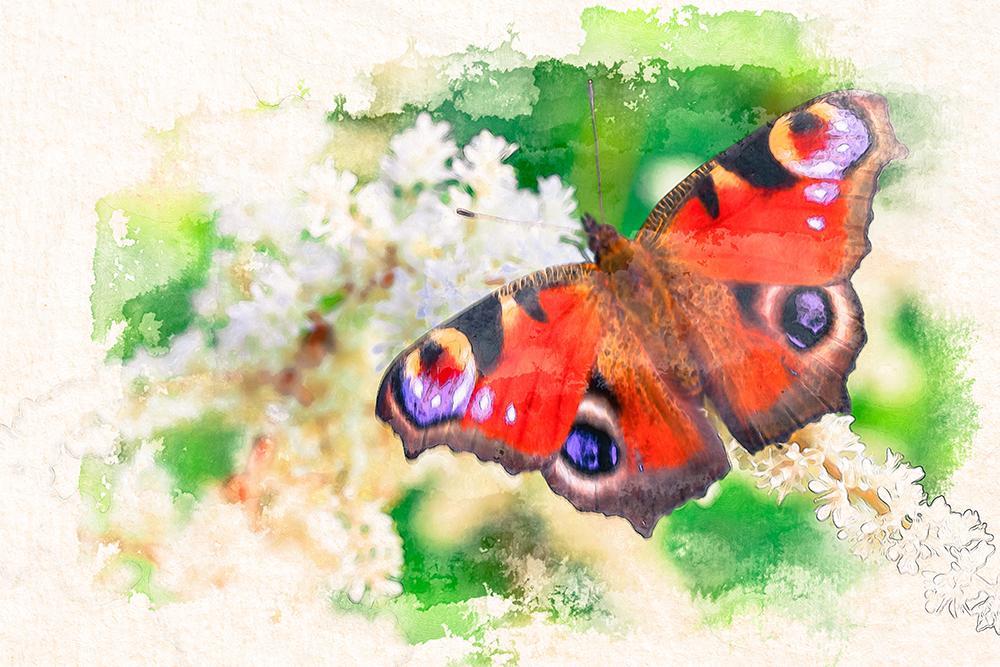 Painting Butterflies In Watercolor